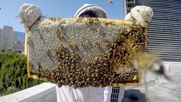 backyard beekeeping to help grow your own food