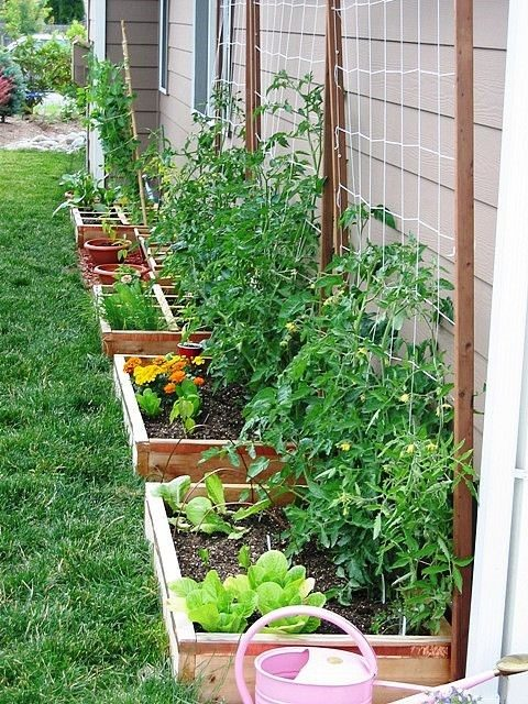 trellis garden to grow your own food