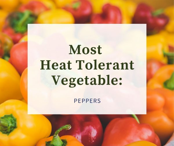 Copy of Most Cold Tolerant Vegetable