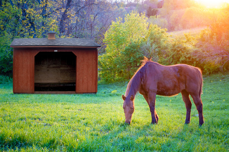 horse loafing shed in or