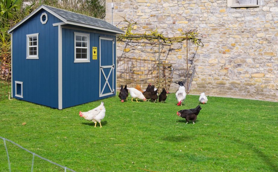 buy chicken coops or
